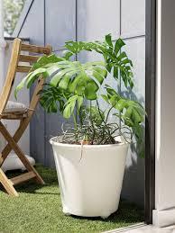 töpfe pflanzen für draußen ikea deutschland