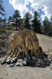 rick and joanne s rv travels florissant fossil beds and colorado