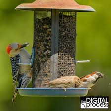 Backyard Bird Photography - A Guide For Beginners Some Ways To Keep Our Backyard Birds Healthy Birds In The These Upcycled Diy Bird Feeders Are Perfect Addition Your Two American Goldfinches Perch On A Bird Feeder Eating Top 10 Backyard Feeding Mistakes Feeder Young Blue Jay First Time Youtube With Stock Photo Image 15090788 Birdfeeding 101 Lover 6 Tips For Heritage Farm Gardenlong Food Haing From A Tree Gallery13 At Chickadee Gardens Visitors North Andover Ma