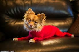 Shed Free Dogs Pictures by Shed Defender Leotard For Dogs Stops Them Shedding Their Hair All