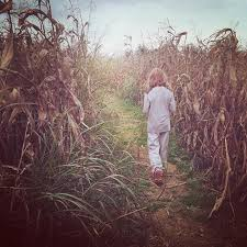 Pumpkin Patch And Corn Maze Milton Fl by 7 Awesome Corn Mazes In West Virginia You Have To Do