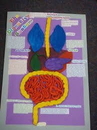 This Is My Digestive Poster