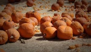 Tucson Pumpkin Patch by Seasons U2026 U2013 Have Teacup Will Travel