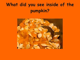 Life Cycle Of A Pumpkin Seed Worksheet by The Life Cycle Of A Pumpkin