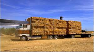 Peterbilt 362 Hay Hauler - YouTube Hay For Sale In Boon Michigan Boonville Map Outstanding Dreams Alpaca Farm Phil Liske Straw Richs Cnection Peterbilt 379 At Truckin Kids 2013 Youtube Bruckners Bruckner Truck Sales Lorry Stock Photos Images Alamy Mitsubishi Raider Wikipedia For Lubbock Tx Freightliner Western Star Barmedman Motors Cars Sale In Riverina New South Wales On Economy Mfg Dennis Farms Equipment Auction The Wendt Group Inc Land And