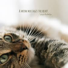 cat quotes 30 quotes only cat will understand