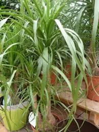 plantes vertes d interieur pépinières plantes d intérieur vente d arbustes plantes vertes