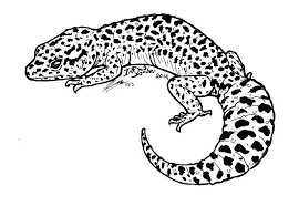 Gekko Pj Mask Coloring Pages Crested Gecko Free Leopard Printable For A