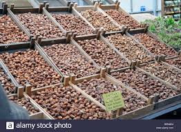 tulip bulbs on sale at flower market in amsterdam netherlands