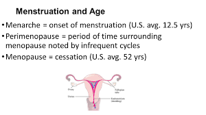 Uterine Lining Shedding Period by Chemical Regulation Of The Reproductive System Anatomy