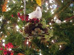What Kind Of Trees Are Christmas Trees by Tennessee Music Blog By Candace Corrigan