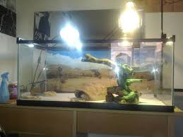 Bearded Dragon Heat Lamp Broke by Doesn U0027t Leave His Cave U2022 Bearded Dragon Org