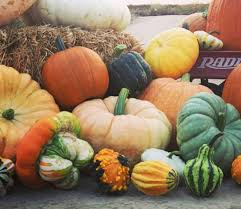 Central Wisconsin Pumpkin Patches by Pumpkin Patch And Festival Of Hope Partner To Fight Cancer Kneb