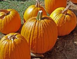 Pumpkin Picking Richmond by Pyop 10 Great Places For Pumpkin Picking In Rhode Island