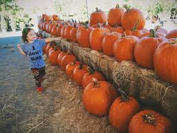 Pumpkin Patches In Charlotte Nc by Flamingo Road Nursery Thenurseries