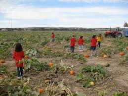 El Paso Pumpkin Patch by The Land Of Enchantment And Enchiladas Corn Maze Craze