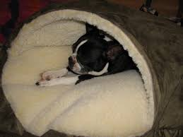 Burrowing Dog Bed by Best Dog Bed Ever