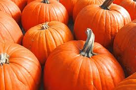 Preparing Pumpkin For Pie Filling by Baking With Pumpkin Making Your Own Fresh Pumpkin Purée Is Easy