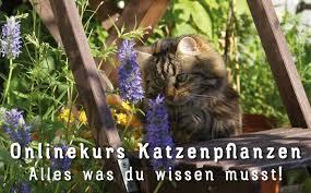 ungiftige pflanzen für katzen mit fotos wichtigen