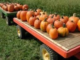 Portland Maine Pumpkin Patch by 36 Best Pumpkin Patches Images On Pinterest Farm Houses Tourism