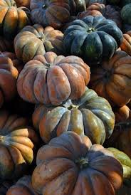 Heather Hill Pumpkin Patch by 30 Best October Flowers Images On Pinterest October Flowers