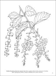 Tropical Flowers Coloring Book