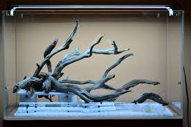 Fallen Tree Branch 60cm jungle mode The Planted Tank Forum