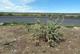 fleur et plante du lac images gratuites côte arbre désert lac vent etats unis
