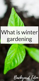 Backyard Winter Gardening | Home Design Inspirations 484 Best Gardening Ideas Images On Pinterest Garden Tips Best 25 Winter Greenhouse Ideas Vegetables Seed Saving Caleb Warnock 9781462113422 Amazoncom Books Small Patio Urban Backyard Slide Landscaping Designs Renaissance With Greenhouse Design Pafighting Fall Lawn Uamp Gardening The Year Round Harvest Trending Vegetable This Is What Buy Vegetables Fresh And Simple In Any Plants Home Ipirations