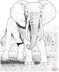 Elephant Coloring Page Elephants Pages Free Drawing