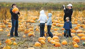 Pumpkin Patch Littleton Co by Outside Guide Corn Mazes And Pumpkin Patches U2013 The Denver Post