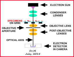 MICROSCOPY FOR RESEARCH EDUCATION AND FUN PART 3 ELECTRON