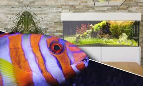 axperto aquarium cubus das design aquarium fürs wohnzimmer