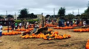 Flower Mound Pumpkin Patch Flower Mound Tx by Here Are The Best Pumpkin Patches In Dfw Kscs Fm