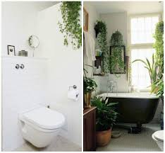 Best Plant For Bathroom by Indoor Apartment Plants House Plants For Urban Dwellers Brit Co
