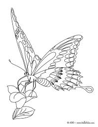 Monarch Butterfly Online Coloring
