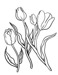 Printable Tulip Coloring Sheet