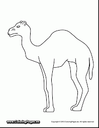 Wonderful Camel Coloring Pages Amazing Desert Uncategorized With Page And Dromedary