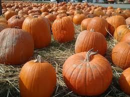 Pumpkin Patch Farm Temecula by Stu Miller U0027s Pumpkin Patch In Murrieta Ca Parent Reviews