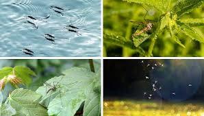 naturmittel gegen stechmücken