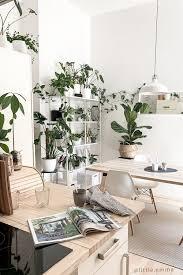 wohnzimmer pflanzen westwing wohnzimmer pflanzen