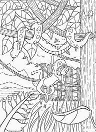 Rainforest Coloring Page Pictures Free