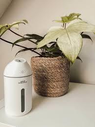 luftbefeuchter für pflanzen meine 4 empfehlungen