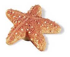 White Starfish Cabinet Knobs by Beach Cabinet Pulls Ebay