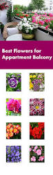 Flowers For Flower Beds by Best Flowers For Balcony Garden
