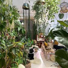 zimmerpflanzen und der neue trend jungle found4you