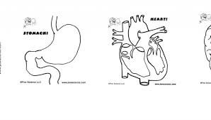 Human Organs Coloring Pages For Kids Body Organ Printables