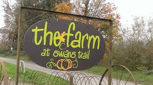 Swan Farms Snohomish Pumpkin Patch by Pumpkin Patch Of Champions The Farm At Swans Trail In Snohomish