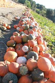 Visalia Mooney Pumpkin Patch by The Savvy U0027s Guide What To Do This Fall Haunted Houses