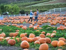 Pumpkin Patch Cal Poly Pomona by Pumpkin Patches On The First Coast Firstcoastnews Com